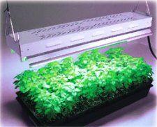 Светодиоды для растений: досветка рассады
