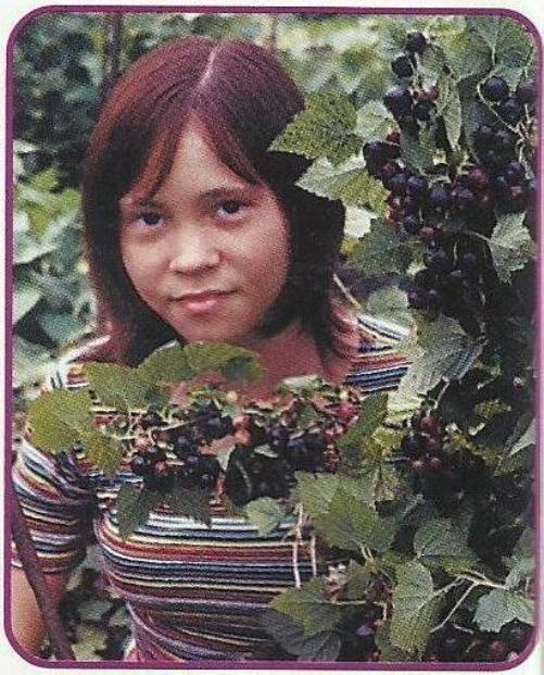 Уход за смородиной в саду, борьба с болезнями и вредителями