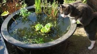 Уход за водоемом: как избавиться от ила и водорослей