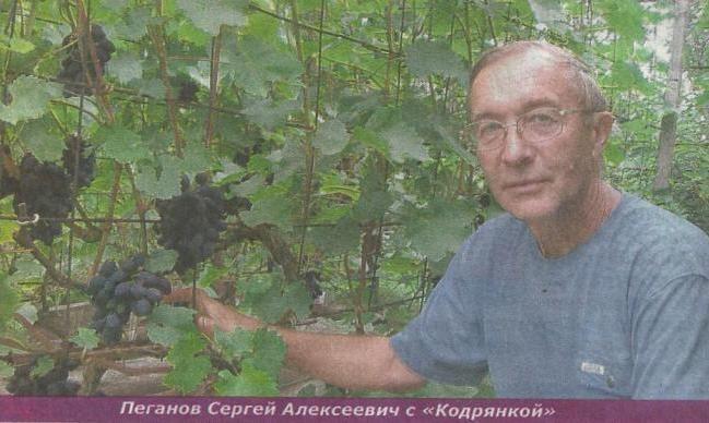 Виноград в новосибирске, опыт выращивания в суровых климатических условиях