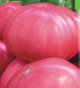 Вкусный и устойчивый к заболеваниям томат — сорт томата «малиновый великан»