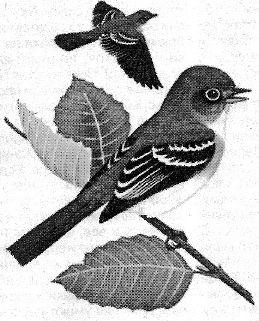 Воробей - полезная птица в саду