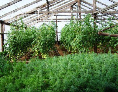 Построит теплицу для выращивания зелени круглый год своими руками