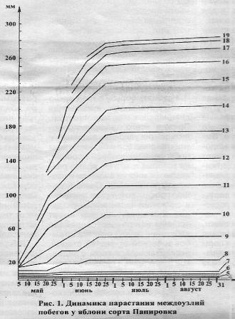 Выбор черенков и почек привоя при выращивании саженцев, разнокачественность подвойного материала