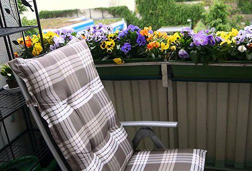 Выбор цветов и правильный уход при выращивании на балконе