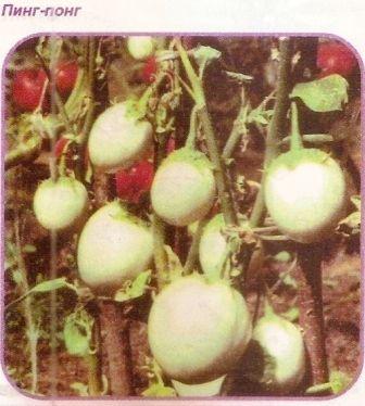 Выращивание баклажан в неблагоприятных климатических условиях, сорта баклажан