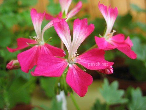Заметки цветовода