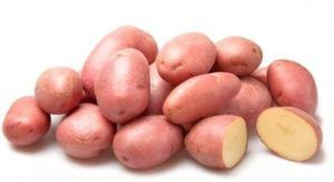 Жароустойчивый картофель «крымская роза» : описание сорта, характеристика, фото